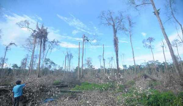 Hutan Taman Nasional Sembilang yang telah dirambah (sumber: sumex.co.id)